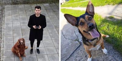 po-lewej-stronie-pies-po-prawej-łapa-w-protezie