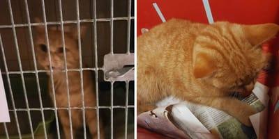 3 katten vergiftigd in Zwolle. Dierenambulance waarschuwt: pas op voor kaasblokjes