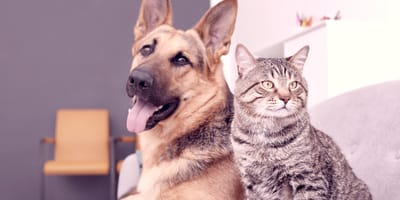 Come abituare il gatto al cane? I consigli di Wamiz