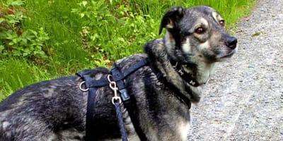 Letztes Video vom grauen Willi aus dem Westerwald sorgt für große Emotionen