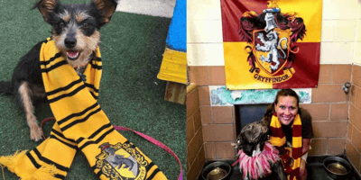 """""""Pawgwarts"""" shelter finds genius way to help their dogs get adopted"""