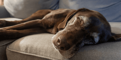 Woman shocked by people's response to her grief after losing beloved dog