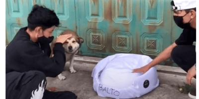 Le hacen una camita a un perro de la calle: su reacción te saca las lágrimas