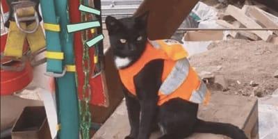 Gattino va a nascondersi in un cantiere e finisce per trovare casa!