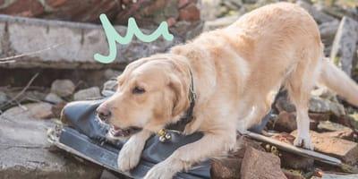 ¿Qué hacer durante un sismo para ayudar a tu mascota?