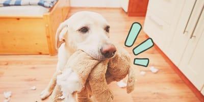 Estos son los perros más malportados según la ciencia