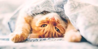 Perché il gatto dorme nel letto con noi?