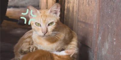 Gato está necio en que lo amamante otro gato macho ¡y se pone pesado!