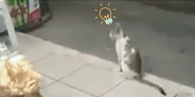 Gato ladrón se hace el despistado para atacar cuando la tienda menos lo espera