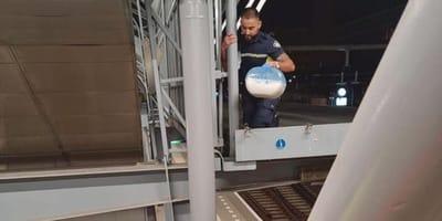 """Kitten vast boven perron Den Bosch: """"raadsel hoe de kat daar gekomen is"""""""