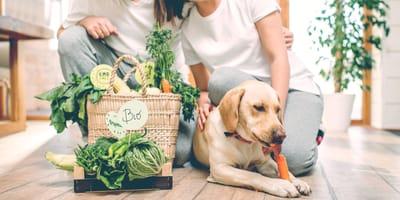 Alimentazione naturale del cane: benefici e raccomandazioni