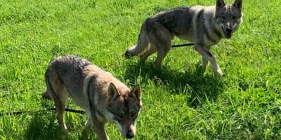 Sachsen in Panik: Tierheim Annaberg sorgt für Klarheit