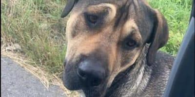 Hund aus Deutschland erlebt in Polen im Sommer den Alptraum seines Lebens