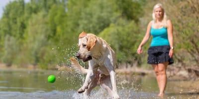 Kobieta rzuca psu piłkę do jeziora, ale tuż przed nim łapie ją... ryba! (VIDEO)
