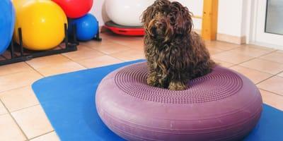 Quali sono le tecniche usate dalla fisioterapia veterinaria?