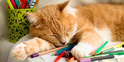 Inizia la scuola, ma questo gatto ne ha già combinata una delle sue