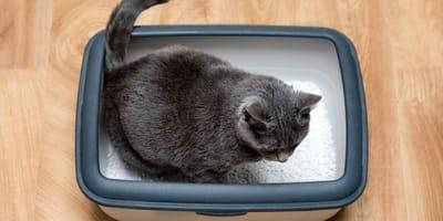 Vermifugo per gatti: alleato contro i parassiti intestinali!