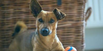 A cosa servono gli ultrasuoni per cani?