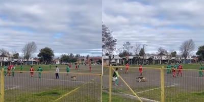 Perro invade partido de futbol, mete un gol y deja a todos los jugadores pasmados