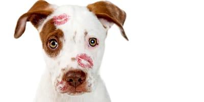 Los 10 perros más cariñosos del mundo