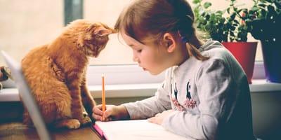 5 razze di gatti adatti ai bambini