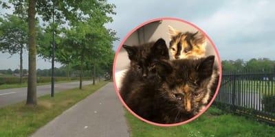 """Persoon gezocht die kitten meenam: """"Het diertje heeft dringend medische hulp nodig"""""""