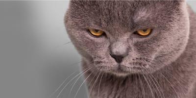 Come ci vedono i gatti a noi umani?