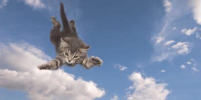 un gato volando por los aires