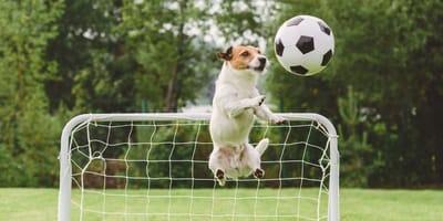 Más de 50 nombres para perros de los jugadores del Real Madrid
