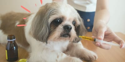 ¿Los parásitos de los perros se contagian a las personas?
