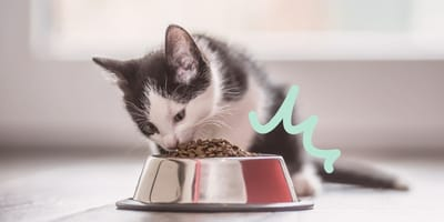 Qué darle de comer a un gato de 3 meses