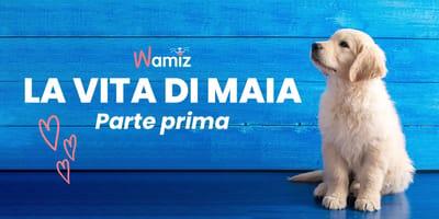 Storie di Cani: La Vita di Maia - Parte I