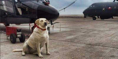 Quién fue Valentina Gan, la primera perrita aviadora naval chilena