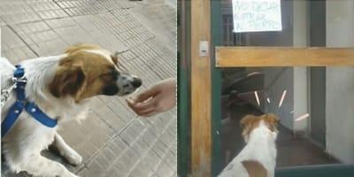 Perro perdido los guía hasta su hogar: al llegar ven que está vetado del edificio