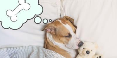 Esto sueñan los perros según la ciencia