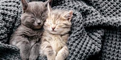 Ecco tutto quello che vorreste sapere sui gatti!