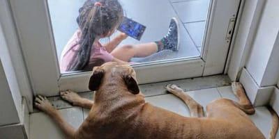 Hund und Mädchen durch Glastür getrennt