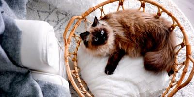 Come preparare tutto per l'arrivo di un gatto in casa?