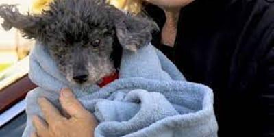 Podrzuca psa do schroniska: kilka godzin później okrutna prawda wychodzi na jaw