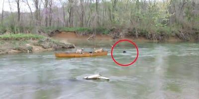 """Dwa psy na łódce potrzebują pomocy, która przychodzi ze strony ogromnego """"stwora"""""""