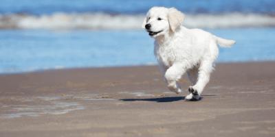 Welpen spielen am Strand: Todeskampf wegen Medusen-Gift!
