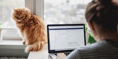 Warum mögen Katzen es nicht, dass wir im Home Office arbeiten?