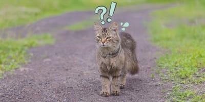 Mi gato se escapó: ¿cuánto va a tardar en regresar?