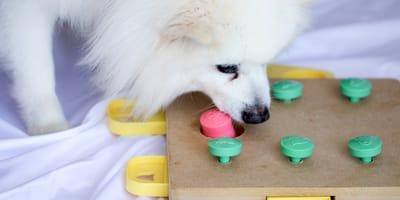 Quali sono i giochi per l'attivazione mentale del cane?