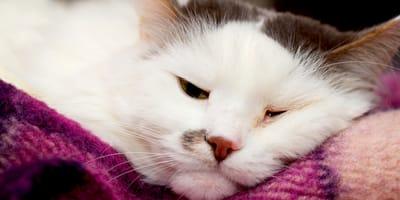 10 sintomi di malattie del gatto da conoscere