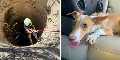 Curaçaouse hond in 25 meter diepe put gevonden (video)