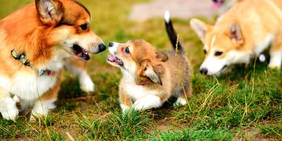 Come funziona la socializzazione del cane?