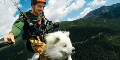Man neemt hond mee paragliding en dat levert bijzondere beelden op