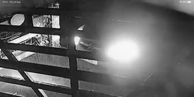 Se despiertan y no encuentran a su perra: la cámara de vigilancia revela una escena poco decente