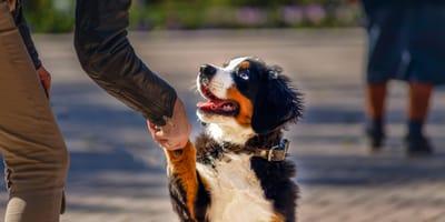 Perché i cani danno la zampa? Tutto sul carattere del cane